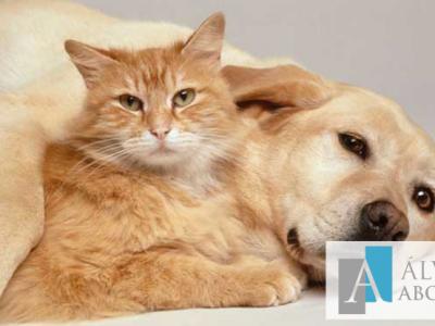 Negligencia en la custodia de animales