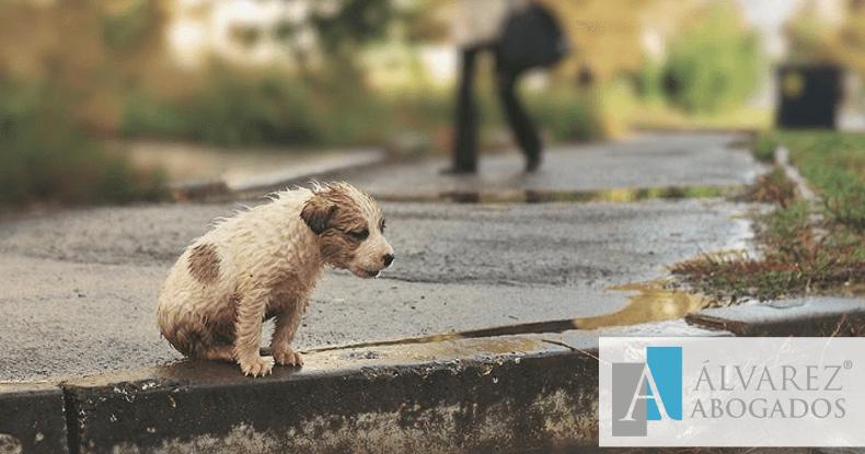 Penas por maltrato y abandono animal