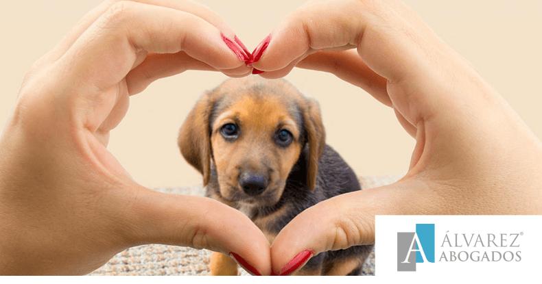 Responsabilidad legal con las mascotas